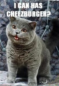 Happycat asks I can has cheezburger?